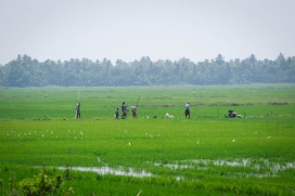 Working the paddy fields