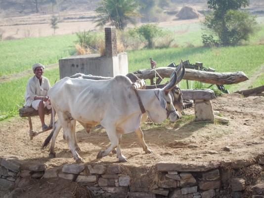 Ranakpur to Udaipur-5