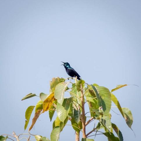 Udaipur (shashi)-5